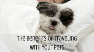 The Benefits of Traveling With Your Pets